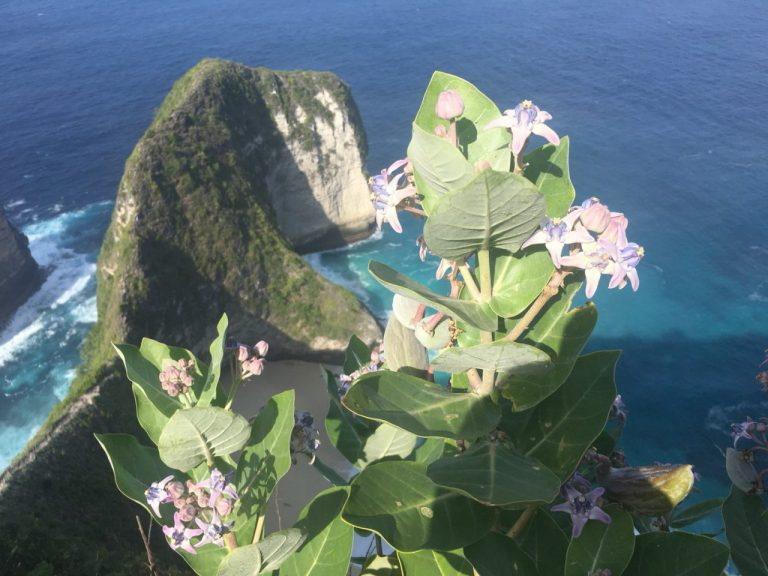 ヌサペニダの花