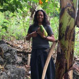 ココナッツの収穫